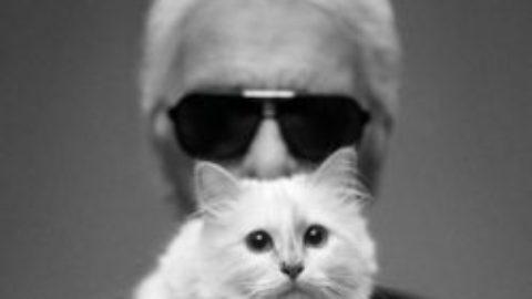 Pisicile – muzele artiștilor